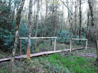 Board walk near the deer wallow in thewet woodland area