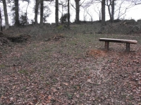 Bench in a large clearing