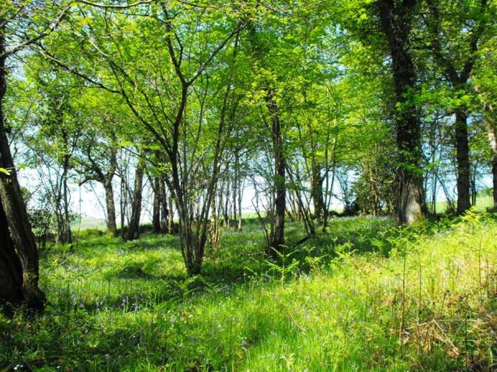 Banks For Sale >> Collacott Wood, Chittlehamholt, Near South Molton, Devon ...
