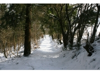 Forestry track in snowy times, leading to the entrance