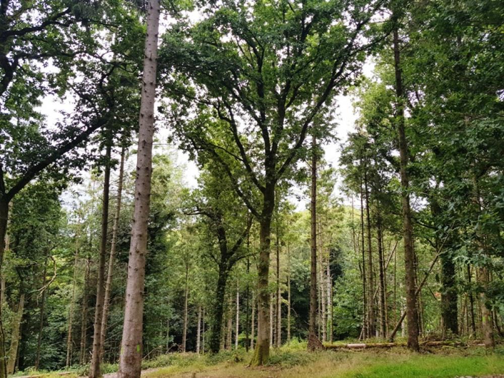 Remnant broadleaved trees