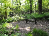Rustic bench within a level area perfect for family camping