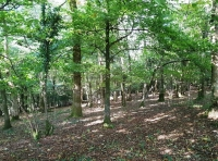 Mixed semi-natural ancient woodland