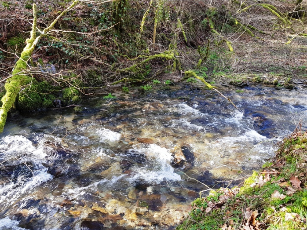 Clear fast flowing stream along the boundary