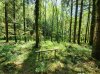 Bench within the western area of trees