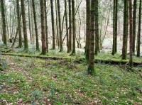 View of the eastern part of the woodland towards the stream