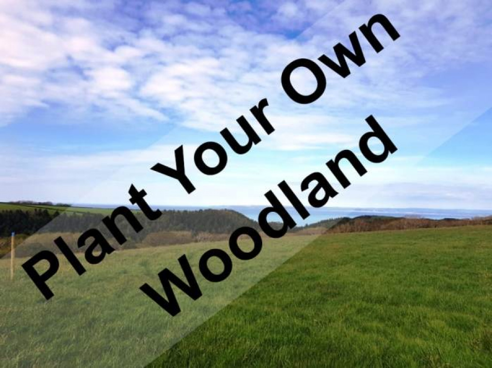 A unique opportunity to create your own woodland
