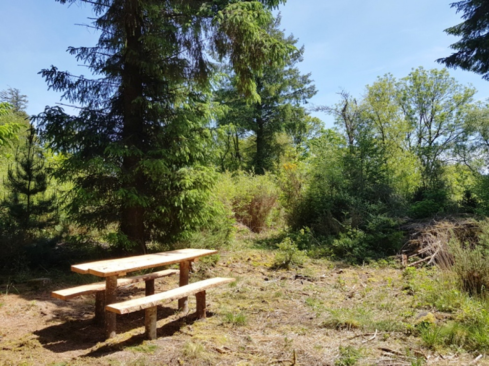 Rustic bench in a sunny clearing