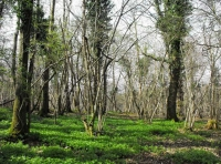 A diverse woodland structure of tall trees, hazel coppice and varied ground flora