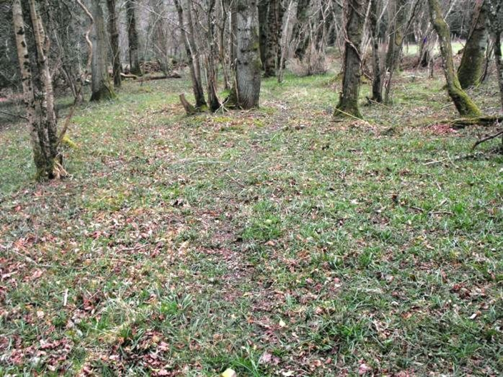 Lightleigh Wood Sold Chittlehamholt Near South Molton