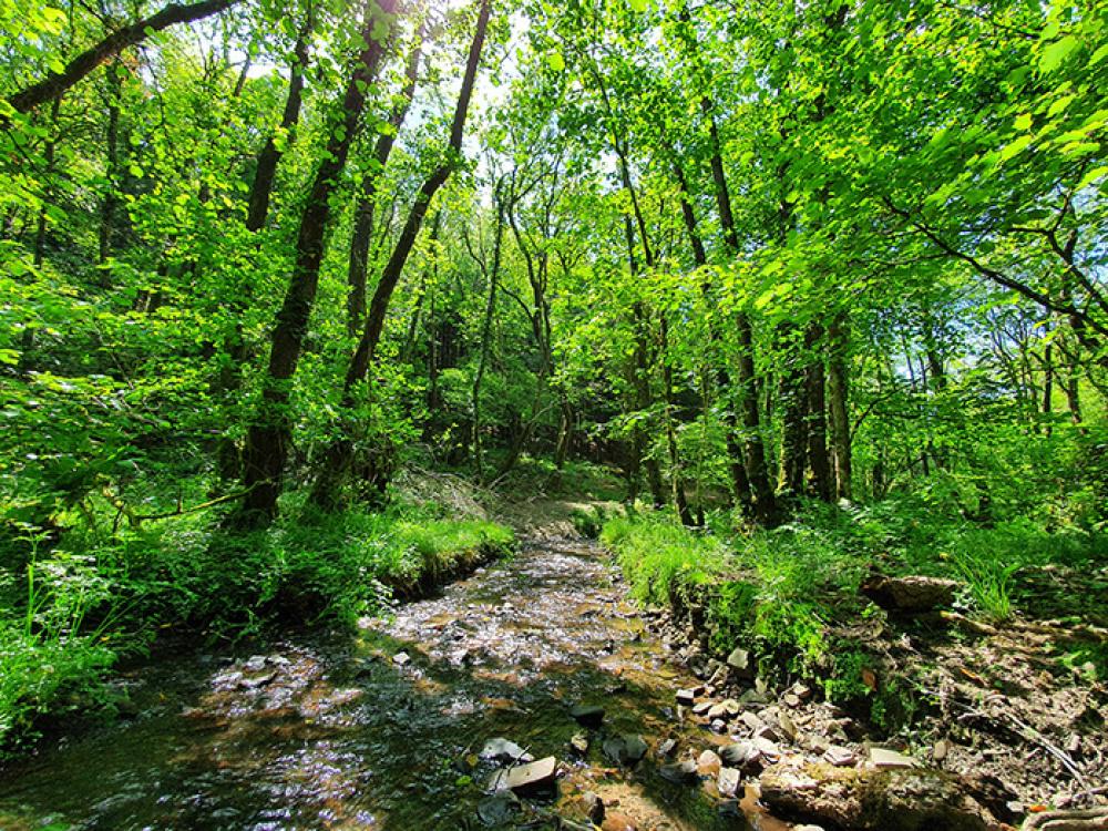 A spectacular stream flows through the woodland