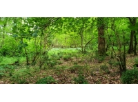 Magical scene of greenery within the woodland