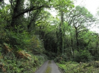 The woodland is sited on a peaceful Devonshire lane