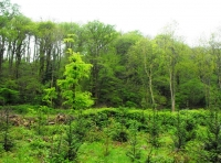 Contrasting areas of green woodland