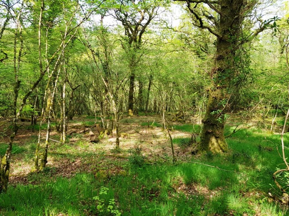 Stunning semi natural ancient woodland