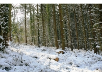 Could be a Scandinavian forest but is a picture of this woodland in the heart of Devon