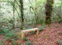 Bench in a clearing