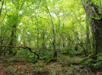 Stunning ancient semi natural woodland