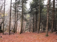 Good clearings within the woodland, perfect for family camping