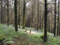 Bench in sunny glade ideal for watching the badgers at dusk