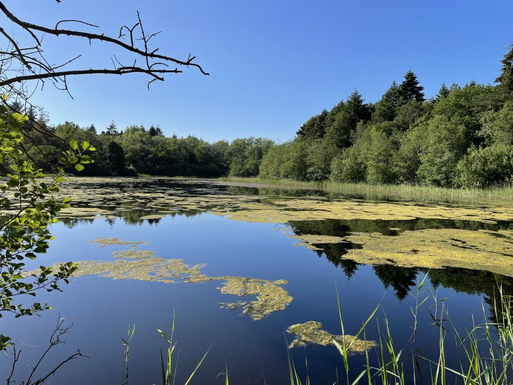 Lake in summer.