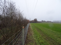 hedge to side of paddock