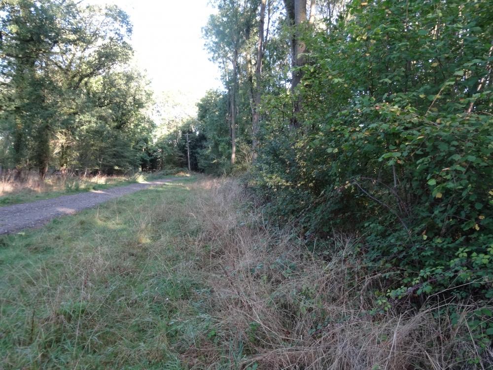 Grass  area beside access track