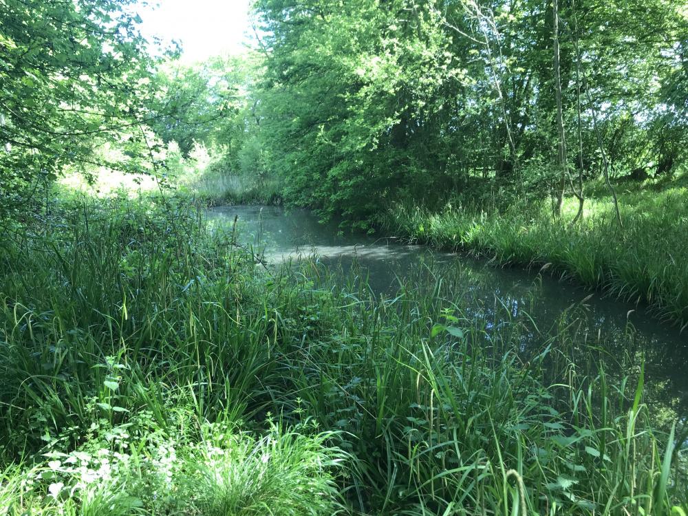 Pond by entrance