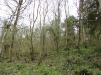 View of the wood