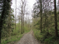 Main track leading to the wood