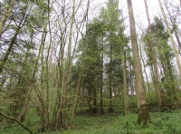 Area of ash trees