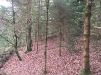 Small area of young conifer/mixed woodland