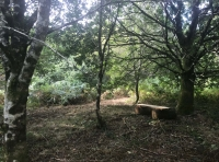 Small clearing with bench