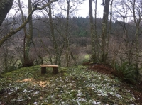 Small clearing with a bench