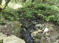 Small stream running through part of the wood