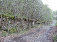 Begining of access track with Coed Trum to the left of the track