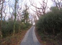 Track leading to the top of the wood