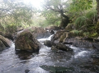 The River Dylif
