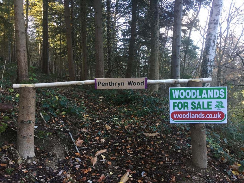 Penthryn Wood - SOLD
