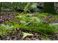 Ferns here and there
