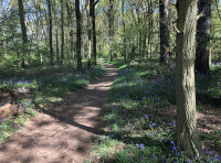 The western boundary, a permissive footpath with verges filled with bluebells and stichwort
