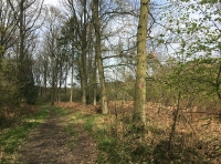 Western boundary track.  Mature oak trees in Brinkworth Wood to the right.