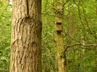 A birdbox, ideal for robins and flycatchers.