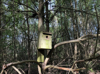 A few bird nest-boxes are fixed in the trees