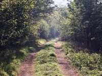 the main track running along the southern boundary.  Fawd Wood is to the left.