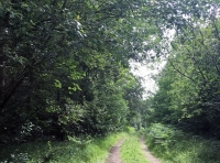The track along the southern boundary (Horse Garth Wood to the left)