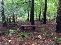 A rustic bench in a beech glade