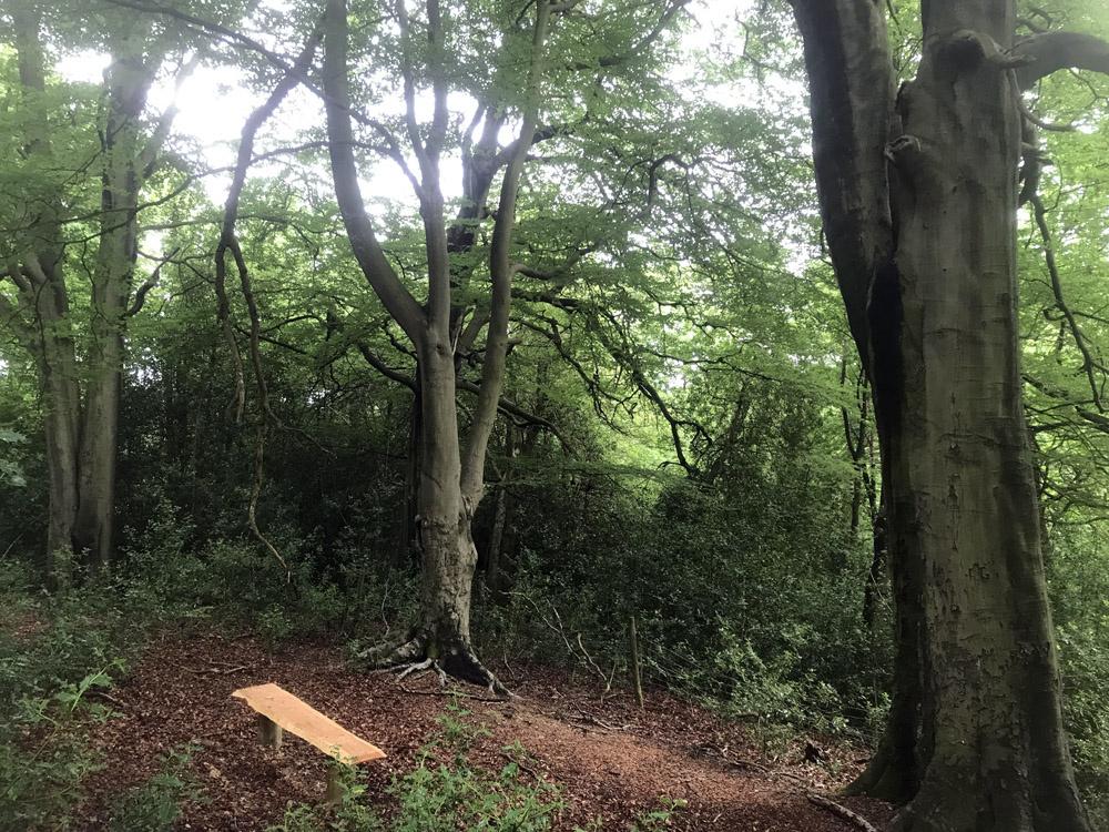 Bench amongst the beech trees.