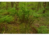 Ferns are also found in the wood.