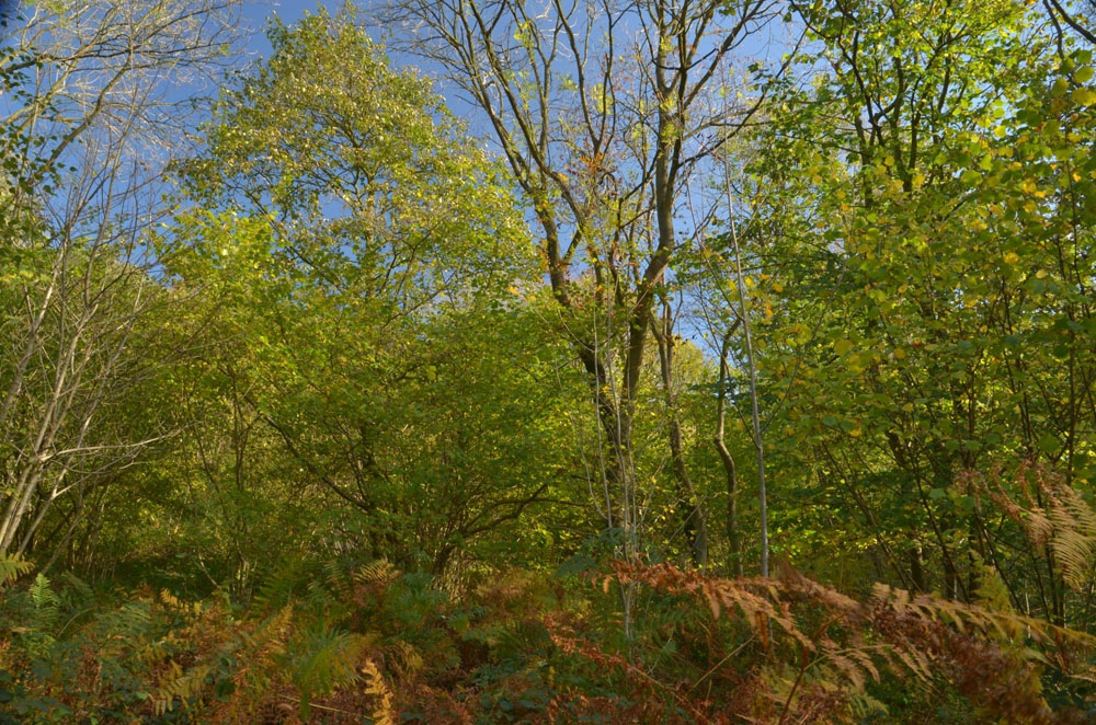 Masson Wood Sold Crich Holloway Near Matlock
